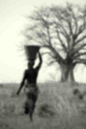 Portören och baobab