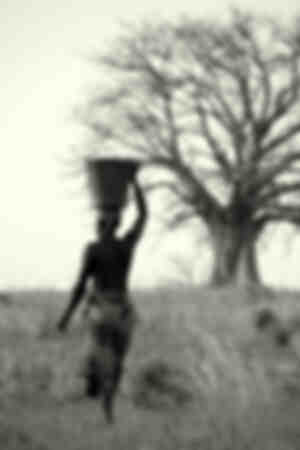 De drager en de baobab
