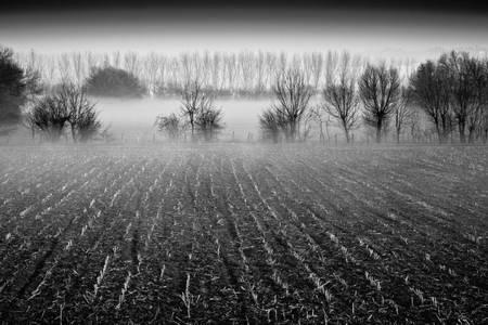 Brume au crepuscule d'hiver