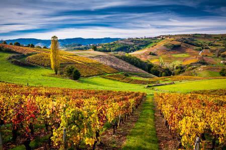 Existencias de vid en el Beaujolais de otoño