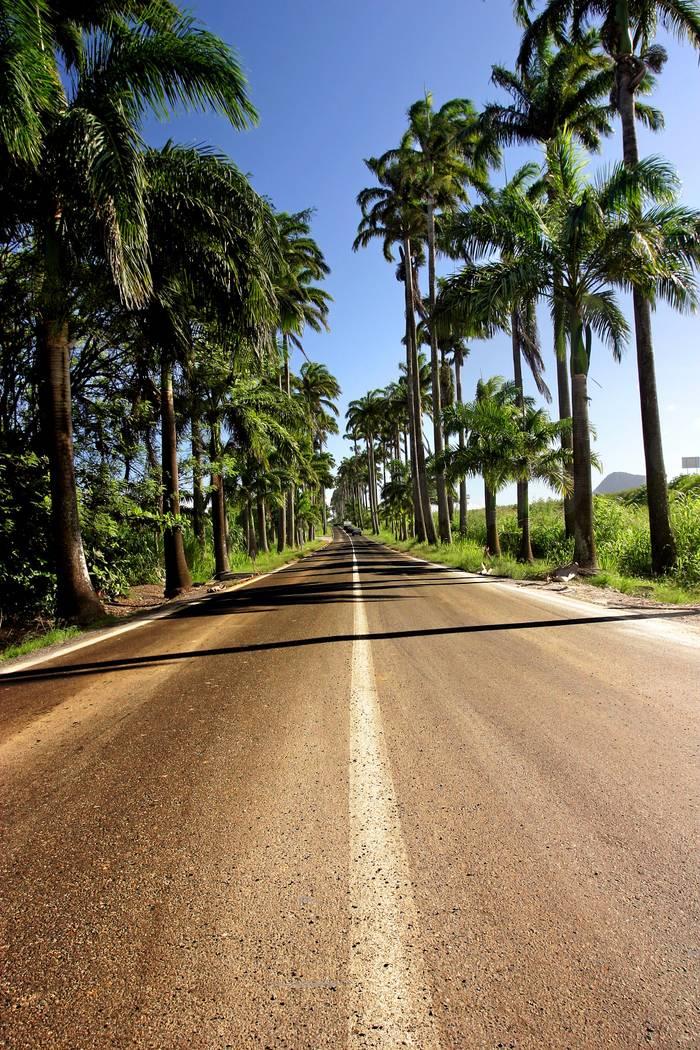 La Route De Palmiers