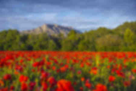 Sainte-Victoire with Poppies
