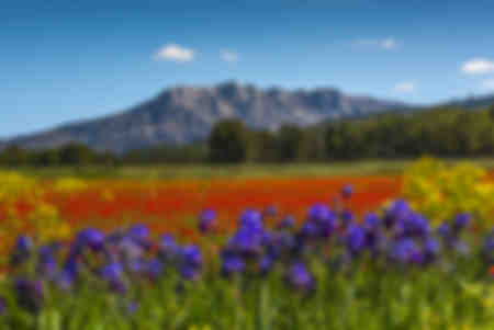 Sainte-Victoire Springtime three