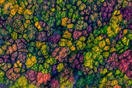 Autumn Canopy 2