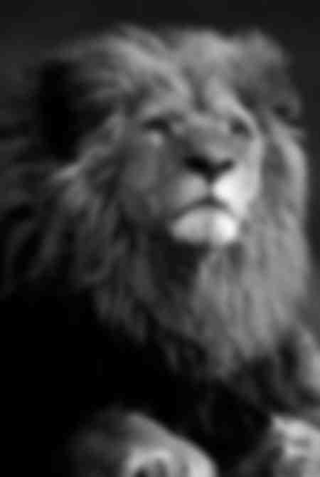 lion_01