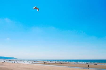 Vol au dessus de la plage