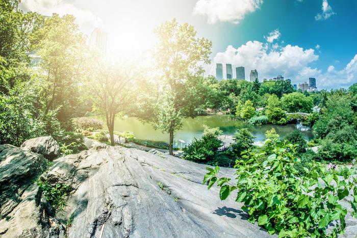 Lumiere Sur Central Park