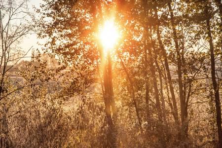 Lever de soleil entre les arbres
