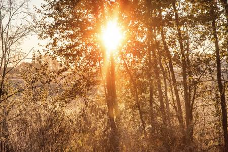 Sunrise between trees
