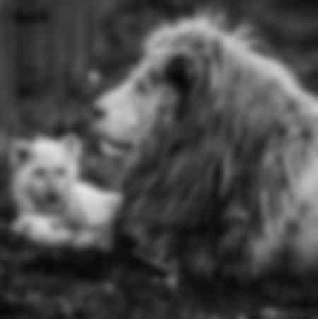 Löwe und Baby