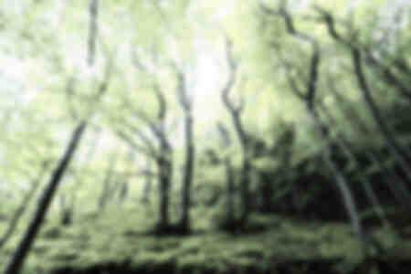 Die seltsamen Bäume