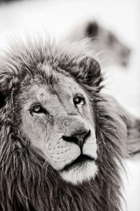 Kruger 1