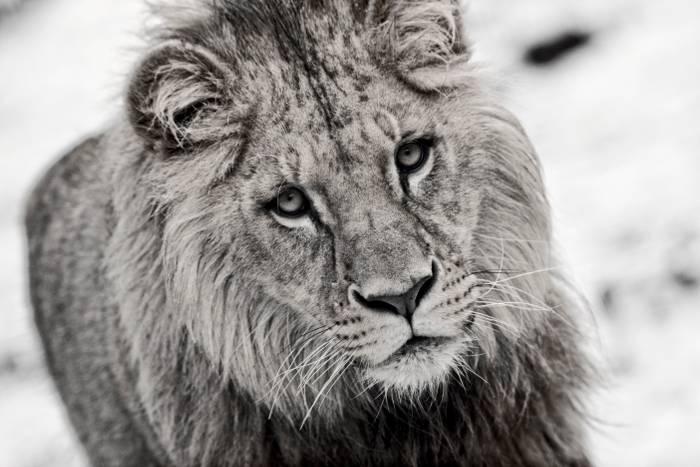 Kruger 2