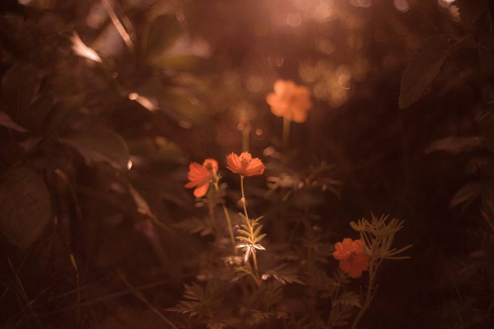 Nature Poetique