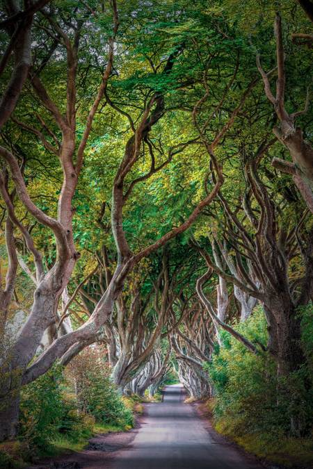 Beautiful Dark Hedges
