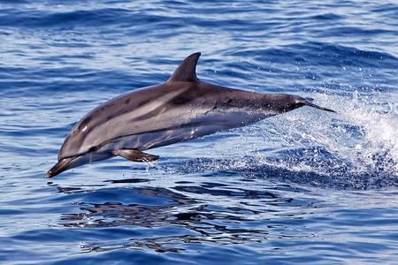 Delfín 04