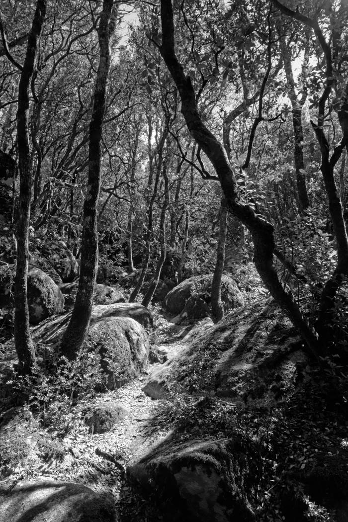 Photo Forêt Noir Et Blanc Achat Vente Edition Limitée