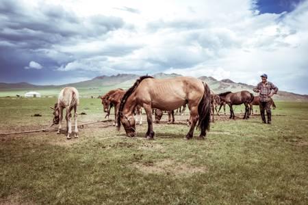 Mongolian breeder