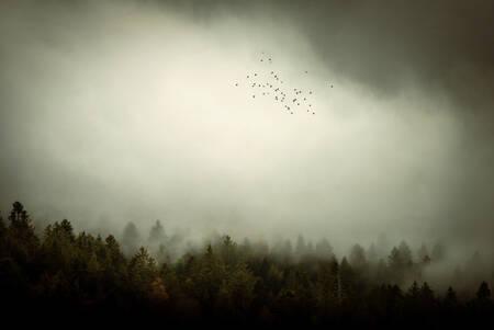 Forêt de montagne dans les nuages 2