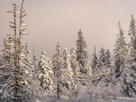 La forêt du Vercors en Hiver