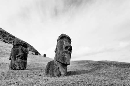 Nurserie de Moai - 4