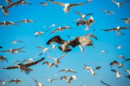 Infinite seagulls
