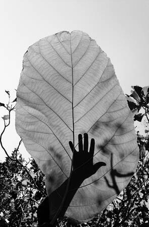 La main et la feuille