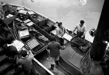 Déchargement de poissons