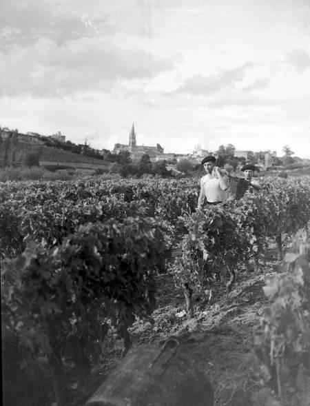 Vendanges en Gironde en 1949