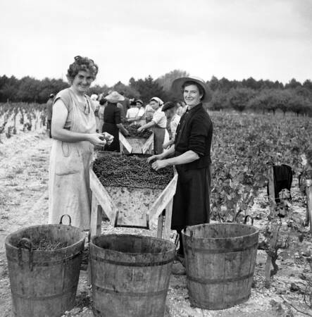 Vendanges en Gironde en 1956 A