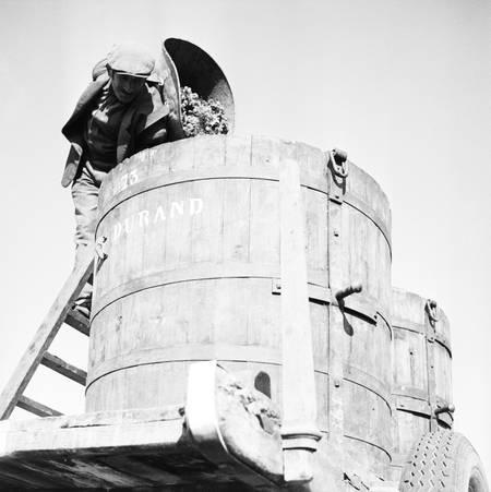 Vendanges en Gironde en 1956