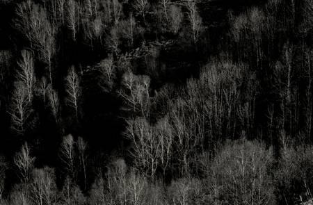 Forêt de boulots