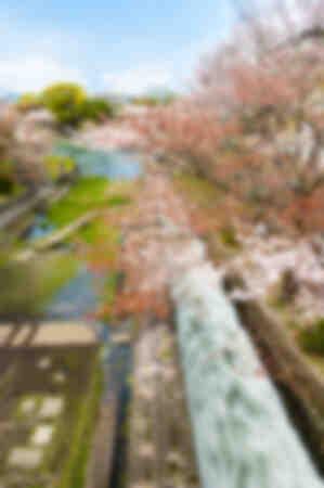 Wildwasser und Kirschbäume