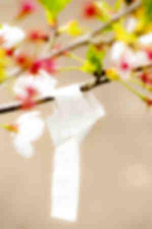 Oración de la flor de Hanami