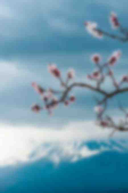 Sakura Fuji san
