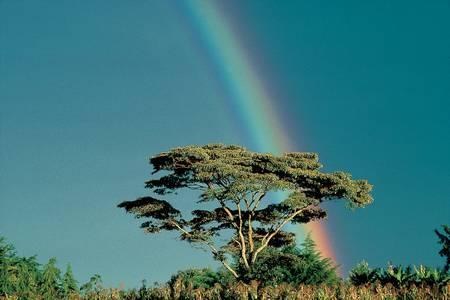 Baobab Kenya