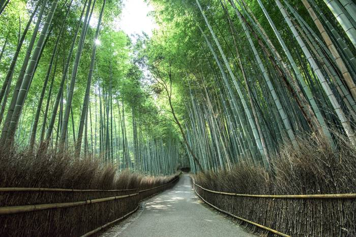 The Pride Of Arashiyama