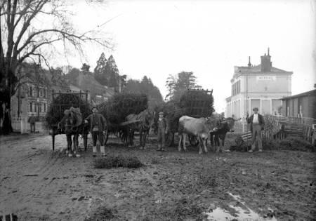 Paysans en Ille et Vilaine dans les années 1950