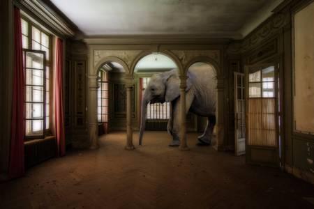 Elephant perdu