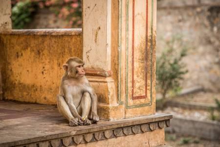 The patient monkey