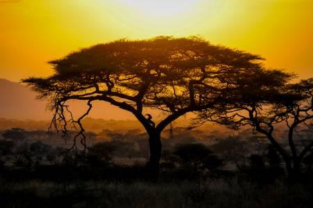 La beauté de l'Afrique