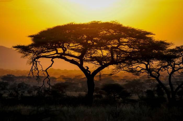 La Beaute De L Afrique