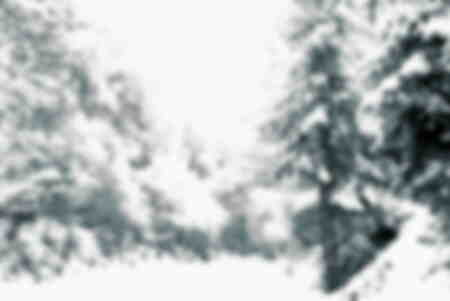 snö i skogen