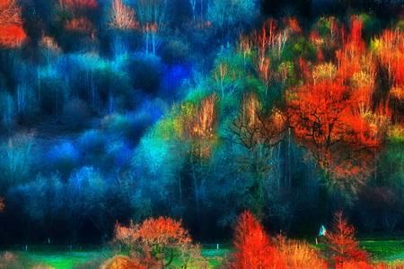 paysage flamboyant