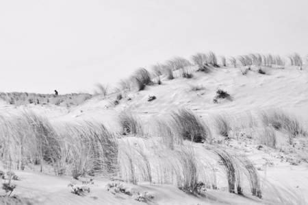 mouvement des herbes couchées par le vent