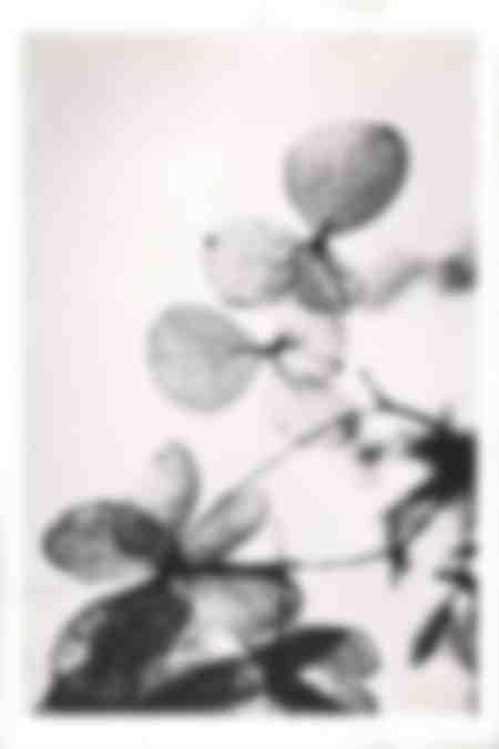 Blätter02