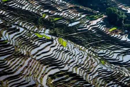 Yuanyang  - Les plus belles rizières du monde