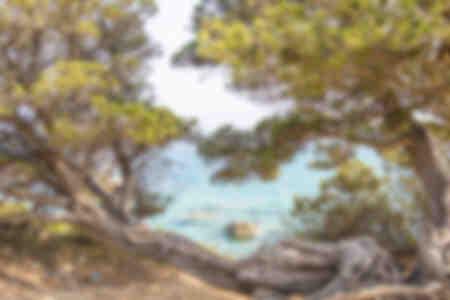 Trees leaning over the Tyrrhenian Sea