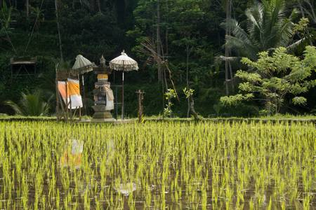 Altar to the offerings on the rice fields
