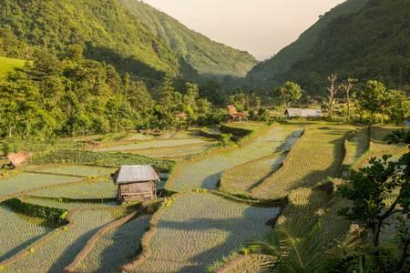 Landschaft der Reisfelder